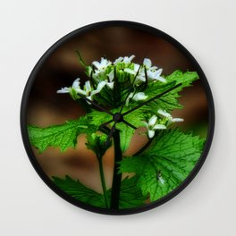 Garlic Mustard Wall Clock