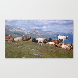 cows chill out Canvas Print