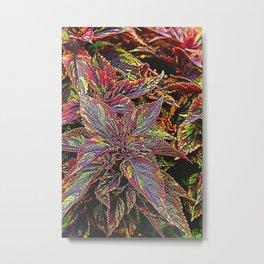 coleus plant leaves in the garden Metal Print