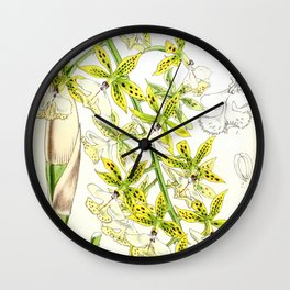 A orchid plant - Vintage illustration Wall Clock