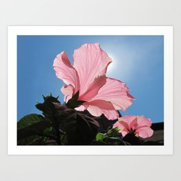 Basking in the Sunlight ~ Pink Hibiscus Flower under Blue Skies on a Sunny Day Art Print
