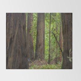 Muir Woods Trees Throw Blanket