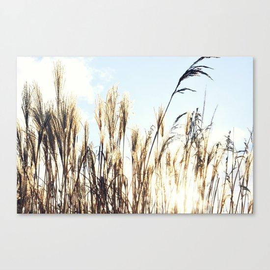 sun setting on reeds Canvas Print