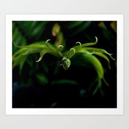Laurels Fern 1 Art Print