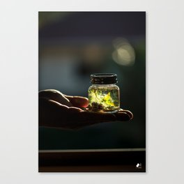 Nature In the Palm of Your Hands Canvas Print