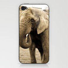 Elephant. iPhone & iPod Skin