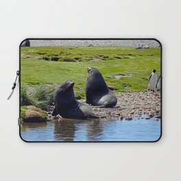 Fur Seals Laptop Sleeve