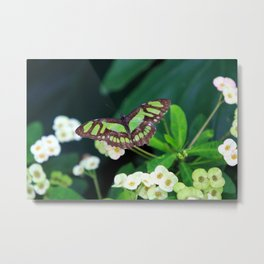 Winged Malachite Metal Print