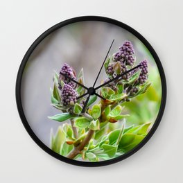 purple lilac buds in spring Wall Clock