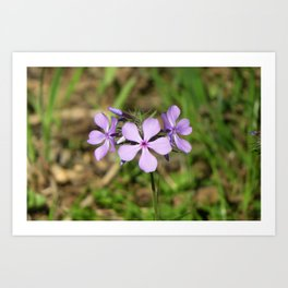 What does the Phlox say? Art Print