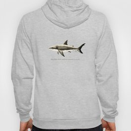 """""""Carcharodon carcharias II"""" by Amber Marine  ~ Great White Shark Illustration, (Copyright 2015) Hoody"""