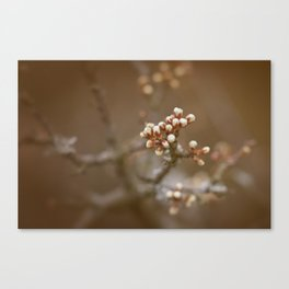 spring is upcoming Canvas Print