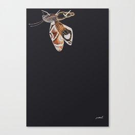 Brown Moth Canvas Print