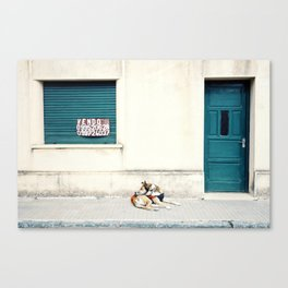 Street dog in Uruguay Canvas Print