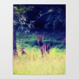 Morning in the Meadow Poster