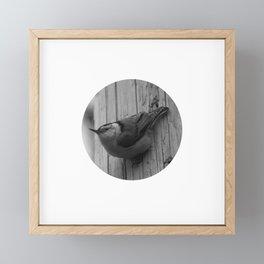 White Breasted Nuthatch Framed Mini Art Print