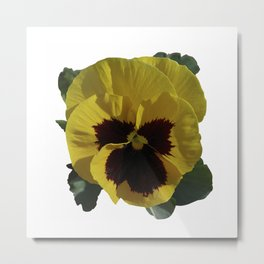 Golden Pansy Metal Print