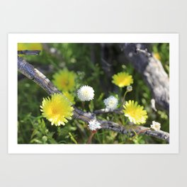 Yellow and White Desert Wildflowers of California by Reay of Light Art Print