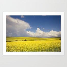 Yellow Canola fields - Landscape Photography #Society6 Art Print