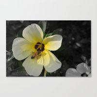 bee Canvas Prints featuring Bee by Lia Bernini