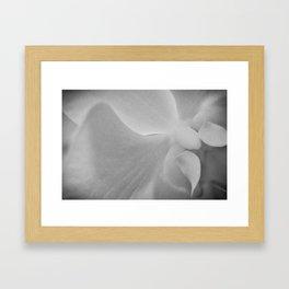 b/w Orchid, 2 Framed Art Print