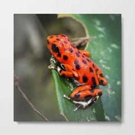 Red Frog Metal Print