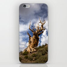 Ancient Bristlecone Pine iPhone & iPod Skin