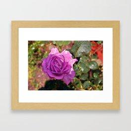 Sardinian Rose Poetry Framed Art Print