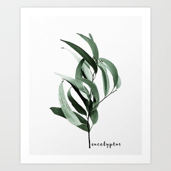 Eucalyptus - Australian gum tree Kunstdrucke