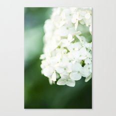 Softly Endearing - Hydrangia in Green Canvas Print