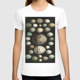 Naturalist Eggs T-shirt