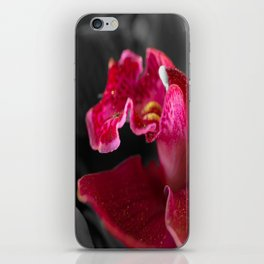 Solo Red Orchid on Grey Background #decor #society6 iPhone Skin