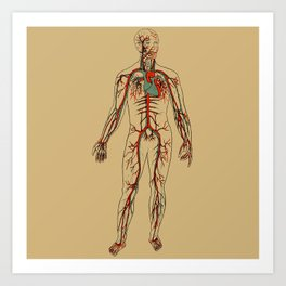 Circulatory System 2 Art Print