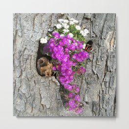 Flowering Vygies and a Squirrel in a tree Metal Print