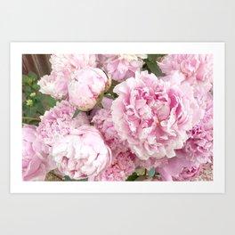 Pink Shabby Chic Peonies - Garden Peony Flowers Wall Prints Home Decor Art Print