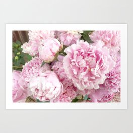 Pink Shabby Chic Peonies - Garden Peony Flowers Wall Prints Home Decor Art Print