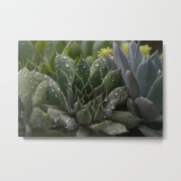 Rained on Cacti Metal Print