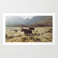 sunrise Art Prints featuring Three Meadow Moose by Kevin Russ