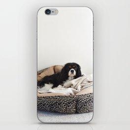 Sleepy Cavalier iPhone Skin
