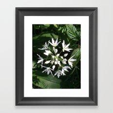 Wild alium Framed Art Print