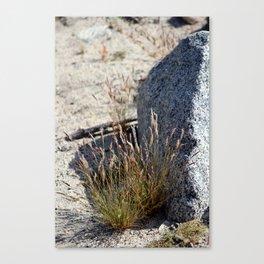 Grass and Granite Coachella Valley Wildlife Preserve Canvas Print