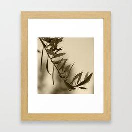Olive Branch Framed Art Print