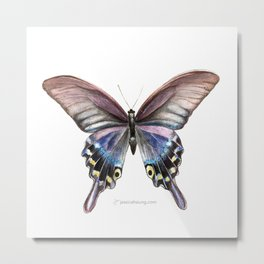 Tiger Swallowtail Butterfly- White Metal Print