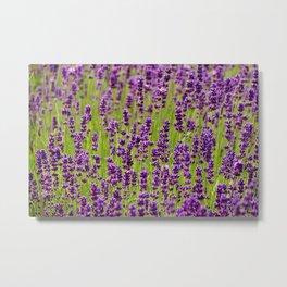 Life in violet color Metal Print