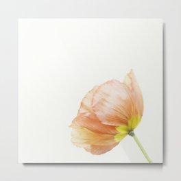 Pink Poppy Flower No. 1   Flower Photograph Metal Print