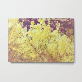 yellow flower - Forsythia Metal Print