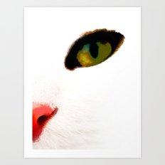 White Cats Face Art Print
