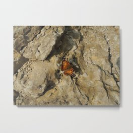 Butterfly on the mountain top Metal Print