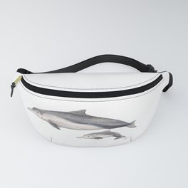 Australian humpback dolphin (Sousa sahulensis) with baby Fanny Pack