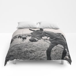 The Horse Comforters
